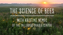 The Science of Bees! with Kristine Nemec promotional image